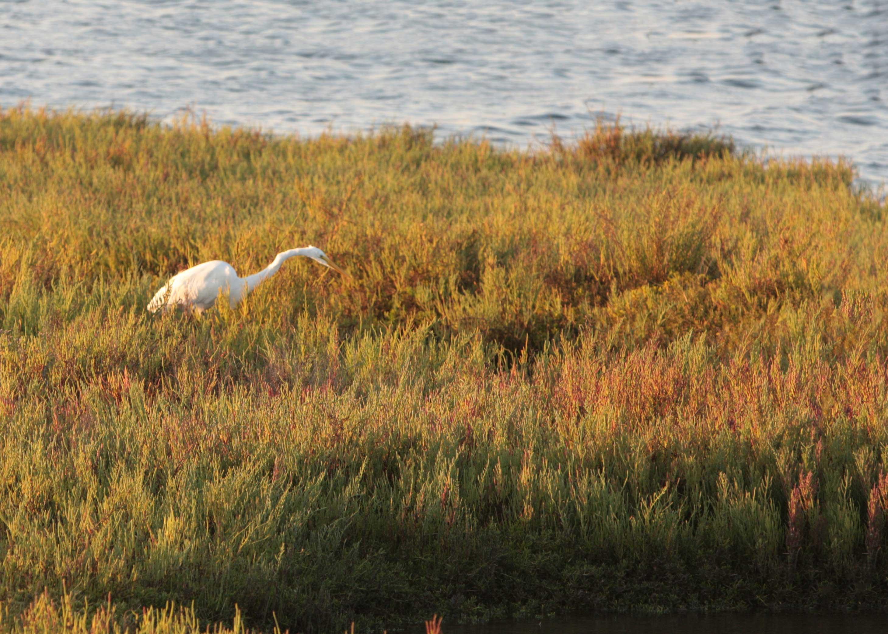Bolsa Chica Wetland