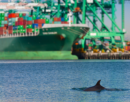 dolphin swimming in port