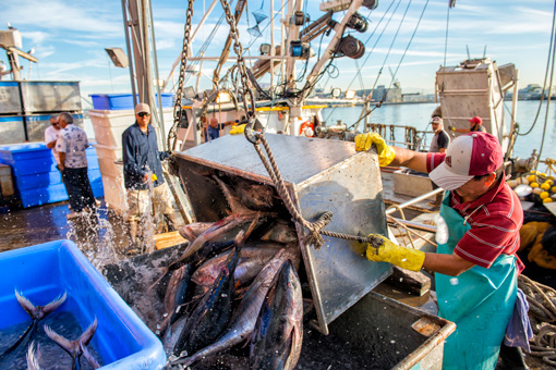 Section 19 Commercial Fishing Vessel