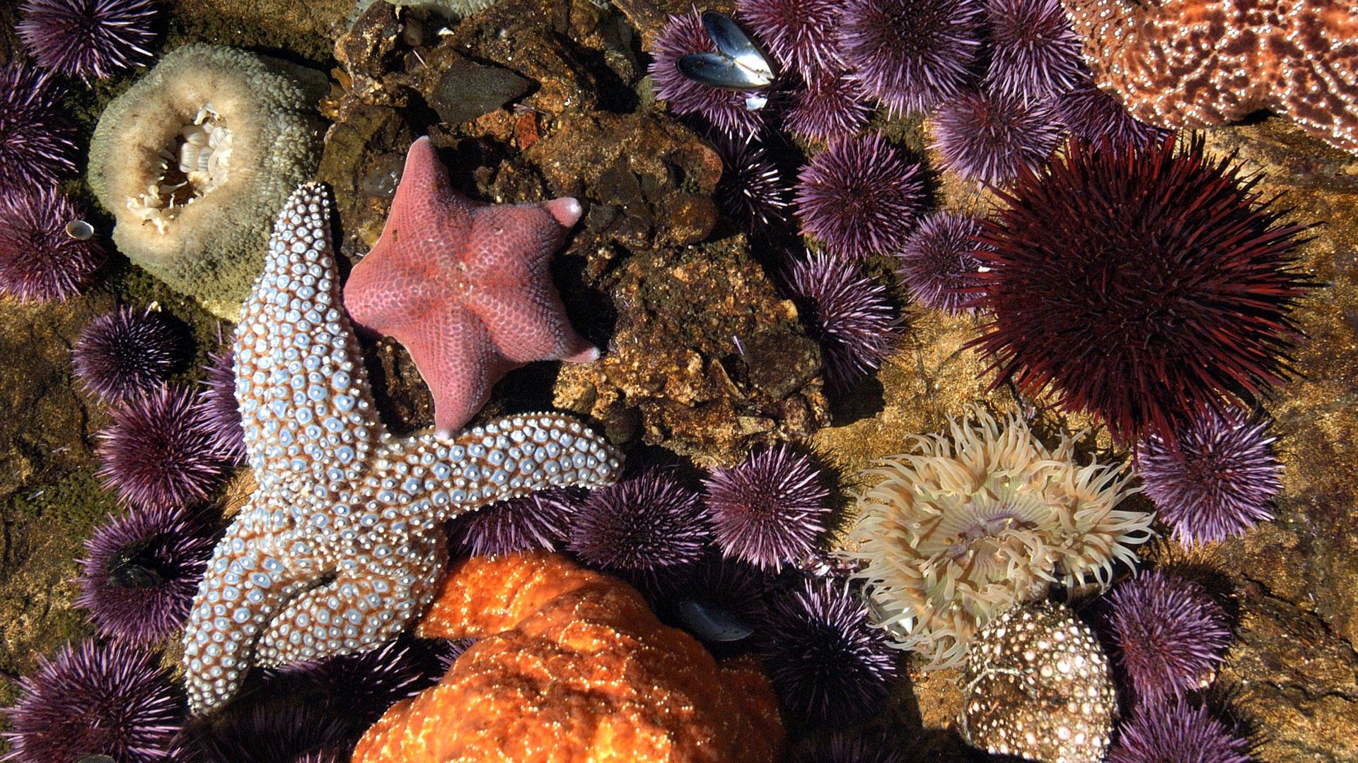 Tidepool Marine Life